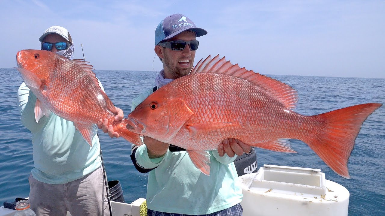 Offshore Fishing In The Gulf Of Mexico   Texas Fishing Guides